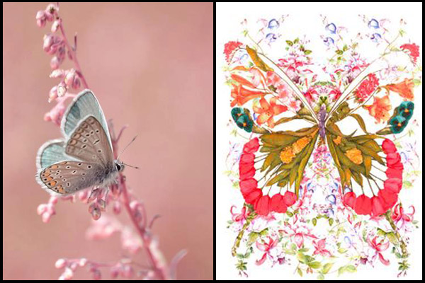 feng shui butterfly paintings