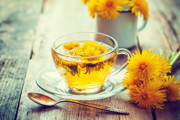 dandelion tea to lose weight