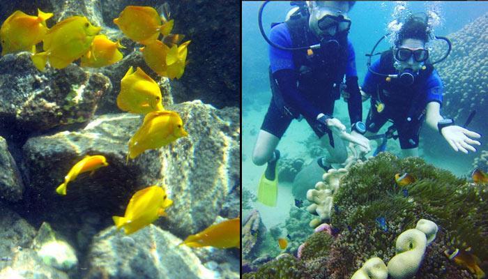 7 Enthralling Honeymoon Destinations For Snorkel Lovers
