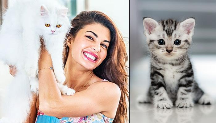 10 Reasons You Will Make A Good Wife If You Are A Cat Lover