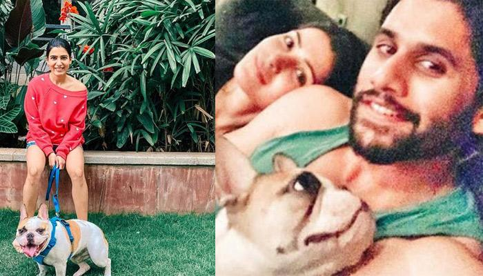 Samantha Akkineni Shares Picture Of Her Happy Place And Her Complete Family And It's Drool Worthy
