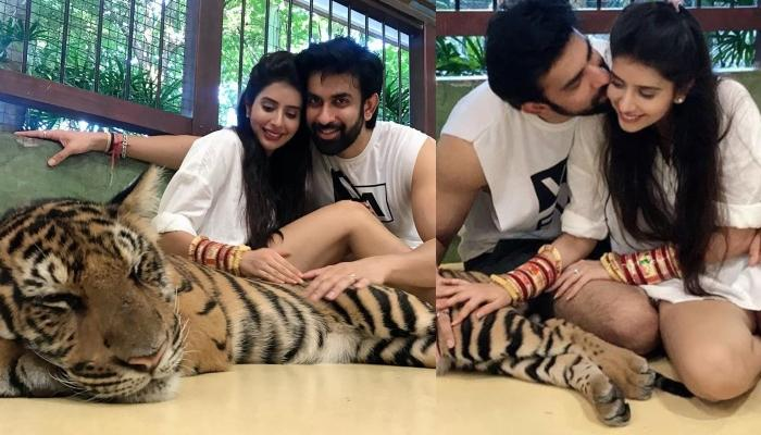Charu Asopa And Rajeev Sen Get Trolled For Posing With A Sedated Tiger During Their Honeymoon