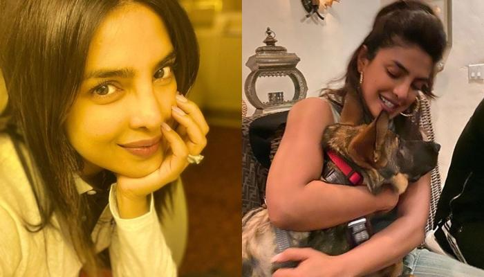 Priyanka Chopra Reveals The Reason For Quarantining Herself Quickly, Says Her Pets Also Follow Rules