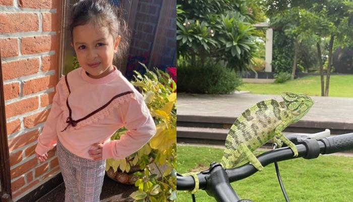 MSD's Little Ziva Makes An Exotic New Friend In Their Garden, Mumma Sakshi Says It's A 'Tourist'