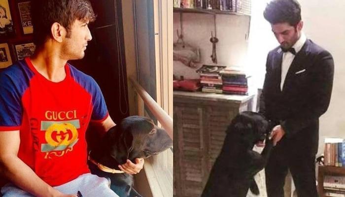 Sushant Singh Rajput's Dog, Fudge Misses Him As He Roams Around The Late Actor's Bike, Video Inside