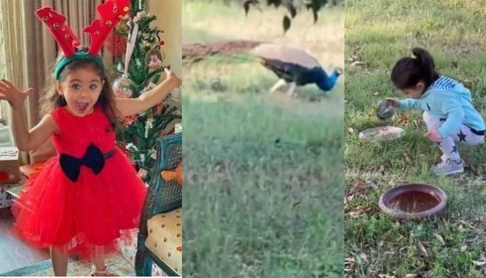 मोर को दाना डालती दिखीं सोहा अली खान की बेटी इनाया, फिर ऐसे लगाया आवाज, देखें प्यारा वीडियो